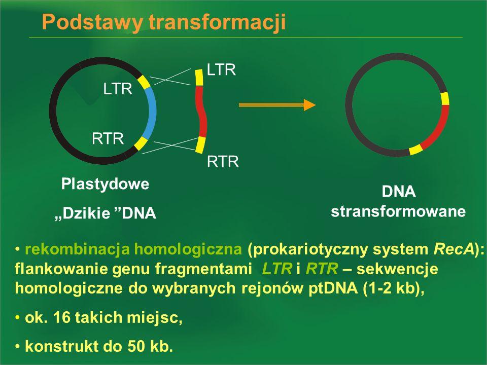 LTR RTR LTR RTR Plastydowe Dzikie DNA DNA stransformowane rekombinacja homologiczna (prokariotyczny system RecA): flankowanie genu fragmentami LTR i R