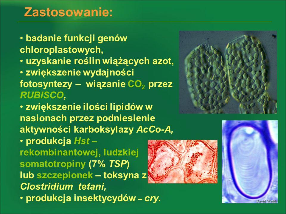 badanie funkcji genów chloroplastowych, uzyskanie roślin wiążących azot, zwiększenie wydajności fotosyntezy – wiązanie CO 2 przez RUBISCO, zwiększenie