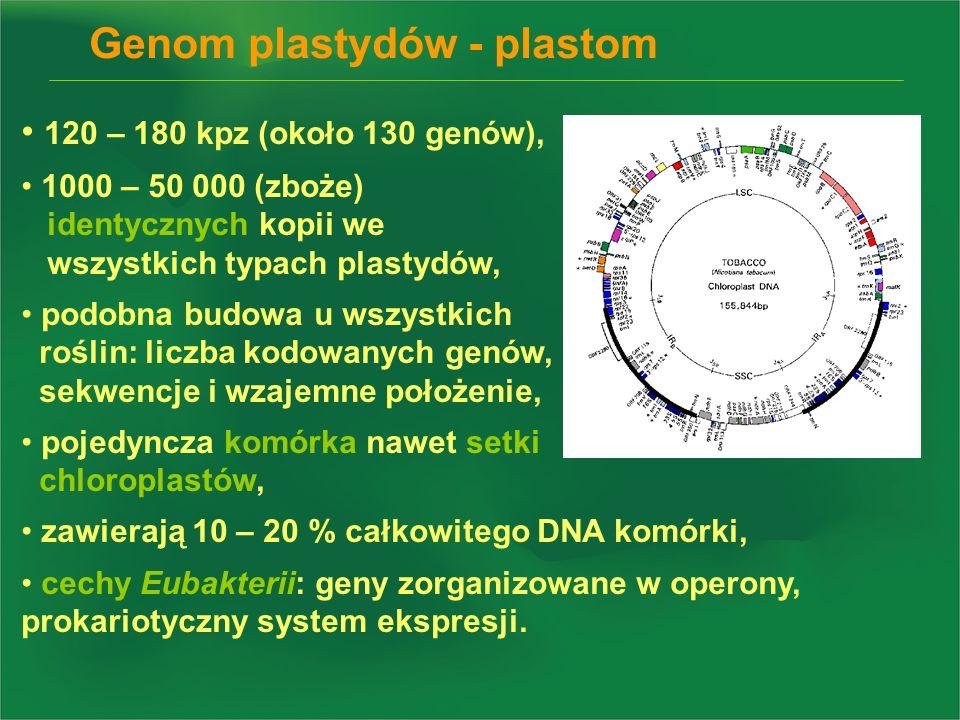 Genom plastydów - plastom 120 – 180 kpz (około 130 genów), 1000 – 50 000 (zboże) identycznych kopii we wszystkich typach plastydów, podobna budowa u w
