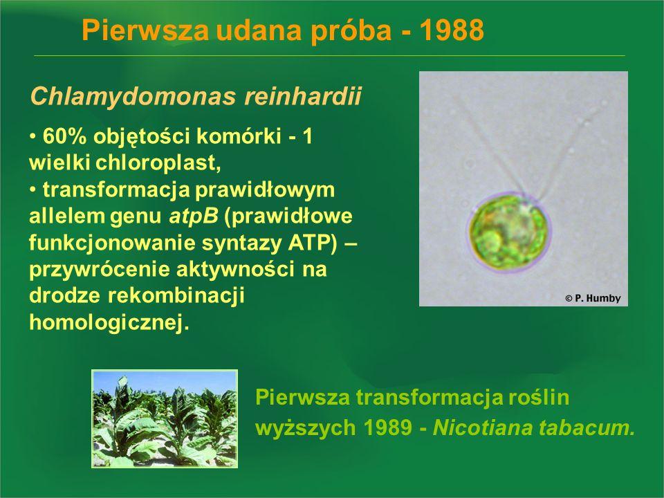 Pierwsza udana próba - 1988 Chlamydomonas reinhardii 60% objętości komórki - 1 wielki chloroplast, transformacja prawidłowym allelem genu atpB (prawid