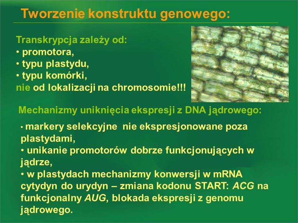 Tworzenie konstruktu genowego: Transkrypcja zależy od: promotora, typu plastydu, typu komórki, nie od lokalizacji na chromosomie!!! markery selekcyjne