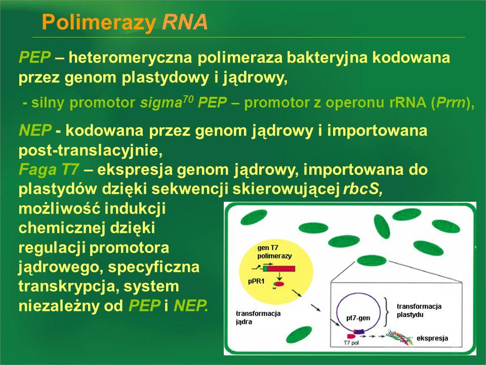 PEP – heteromeryczna polimeraza bakteryjna kodowana przez genom plastydowy i jądrowy, NEP - kodowana przez genom jądrowy i importowana post-translacyj