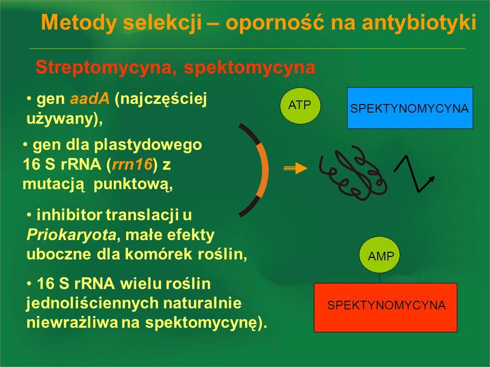 Metody selekcji – oporność na antybiotyki gen dla plastydowego 16 S rRNA (rrn16) z mutacją punktową, gen aadA (najczęściej używany), Streptomycyna, sp