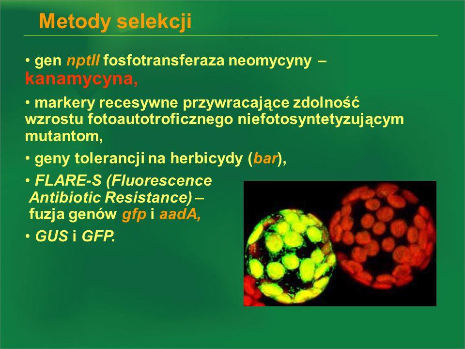 gen nptII fosfotransferaza neomycyny – kanamycyna, markery recesywne przywracające zdolność wzrostu fotoautotroficznego niefotosyntetyzującym mutantom