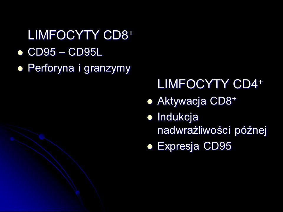 LIMFOCYTY CD8 + CD95 – CD95L CD95 – CD95L Perforyna i granzymy Perforyna i granzymy LIMFOCYTY CD4 + Aktywacja CD8 + Aktywacja CD8 + Indukcja nadwrażli