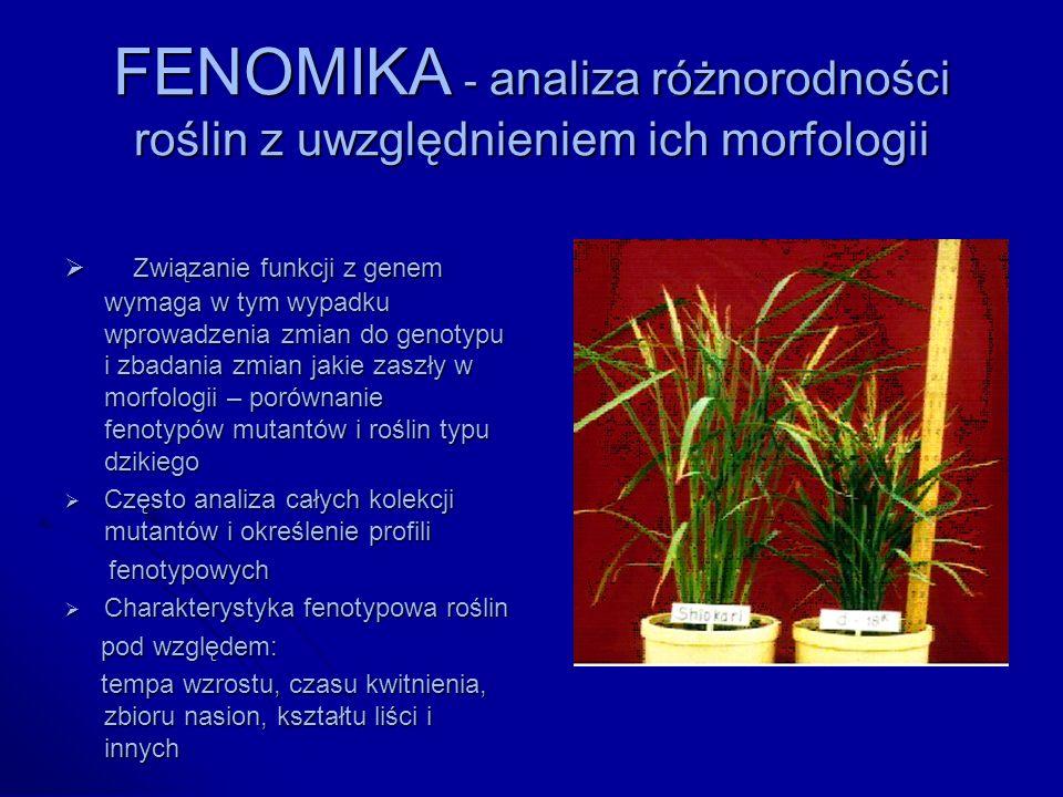 FENOMIKA - analiza różnorodności roślin z uwzględnieniem ich morfologii Związanie funkcji z genem wymaga w tym wypadku wprowadzenia zmian do genotypu