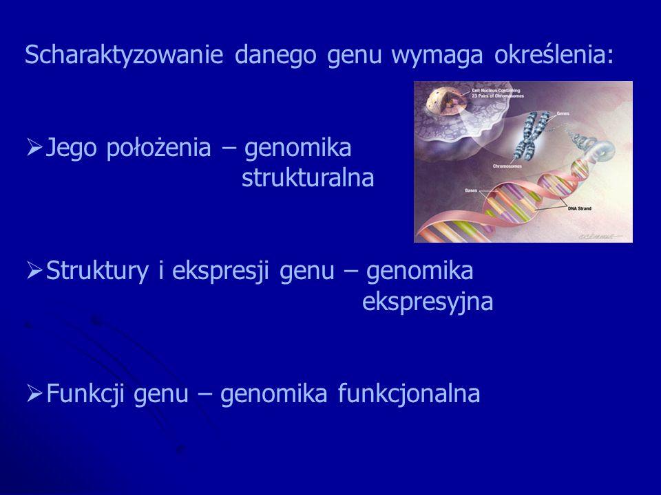 Scharaktyzowanie danego genu wymaga określenia: Jego położenia – genomika strukturalna Struktury i ekspresji genu – genomika ekspresyjna Funkcji genu