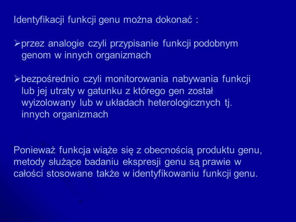 Identyfikacji funkcji genu można dokonać : przez analogie czyli przypisanie funkcji podobnym genom w innych organizmach bezpośrednio czyli monitorowan