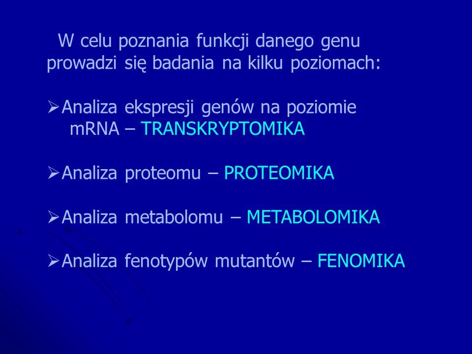 W celu poznania funkcji danego genu prowadzi się badania na kilku poziomach: Analiza ekspresji genów na poziomie mRNA – TRANSKRYPTOMIKA Analiza proteo