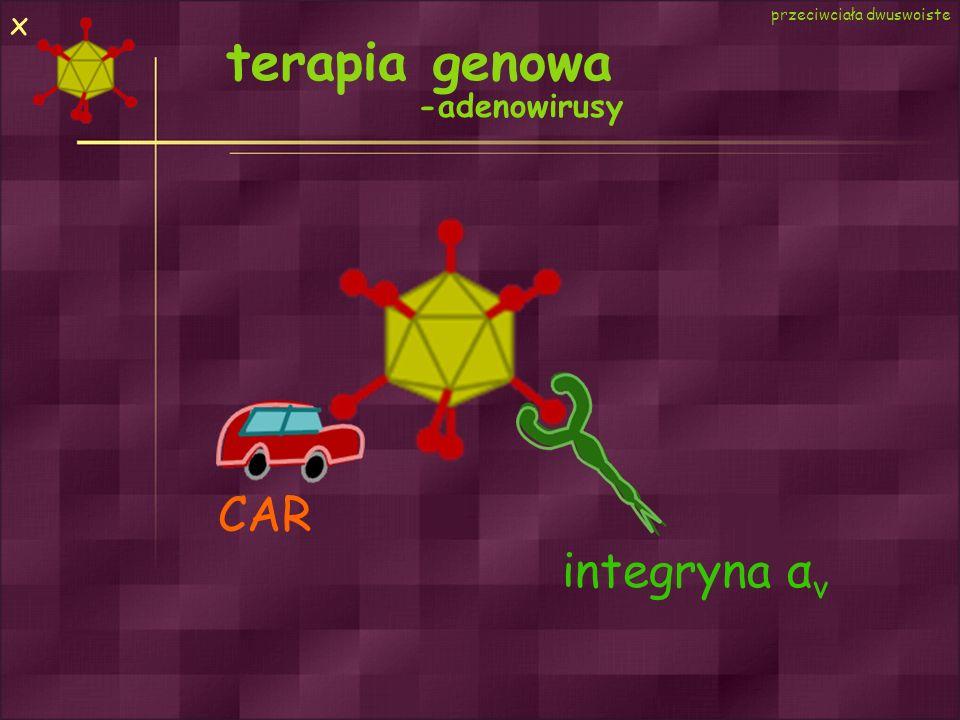 terapia genowa -adenowirusy CAR integryna α v przeciwciała dwuswoiste x
