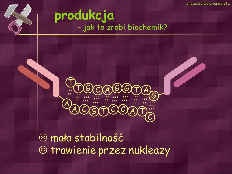 produkcja - jak to zrobi biochemik? przeciwciała dwuswoiste A C GT A AT CCC T G CA T TA GGG mała stabilność trawienie przez nukleazy