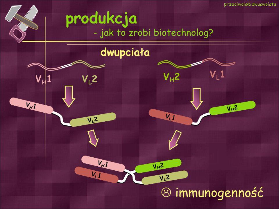 produkcja - jak to zrobi biotechnolog? przeciwciała dwuswoiste dwupciała VL1VL1 VH1VH1 VL2VL2 VH2VH2 VL1VL1 VL2VL2 VH2VH2 VH1VH1 VH1VH1 VL2VL2 VL1VL1