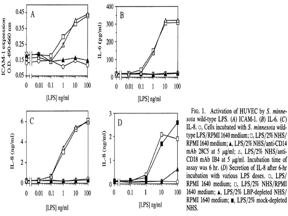 Ilościowe oznaczenie wiązania LPS do komórek epitelialnych
