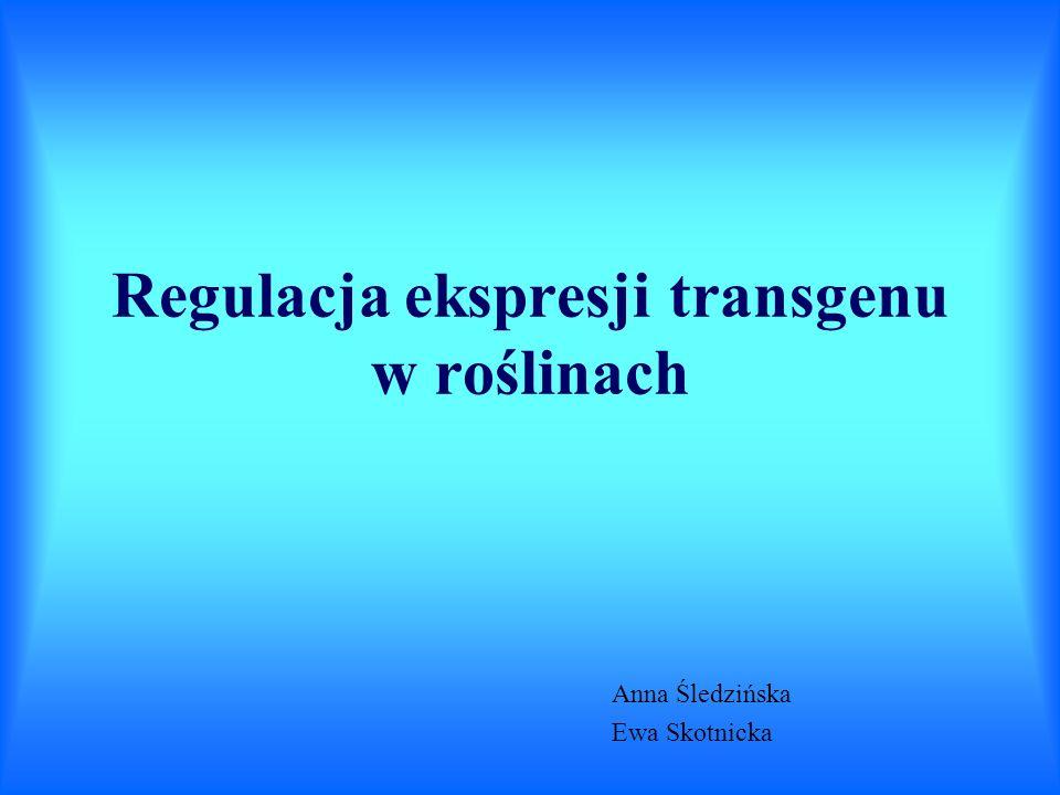 Anna Śledzińska Ewa Skotnicka
