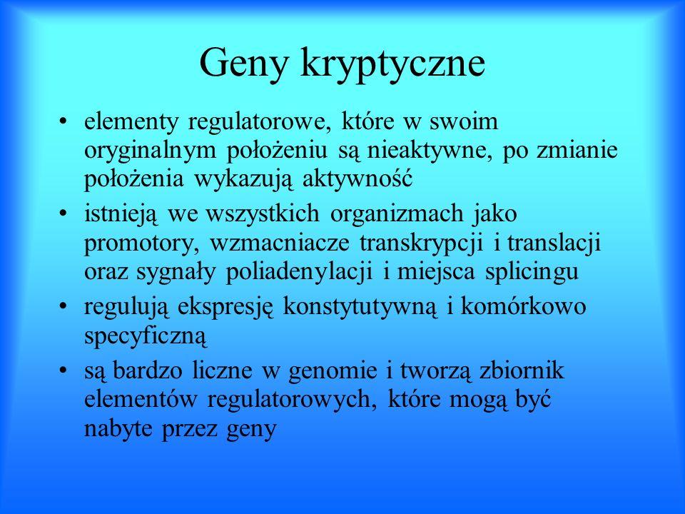 Geny kryptyczne elementy regulatorowe, które w swoim oryginalnym położeniu są nieaktywne, po zmianie położenia wykazują aktywność istnieją we wszystki