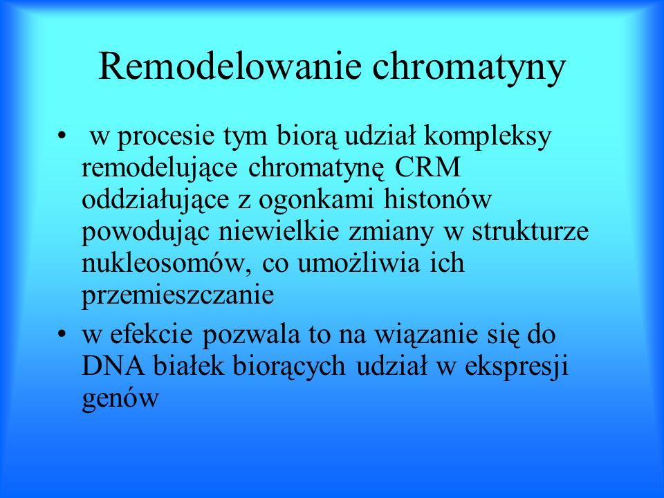 Remodelowanie chromatyny w procesie tym biorą udział kompleksy remodelujące chromatynę CRM oddziałujące z ogonkami histonów powodując niewielkie zmian