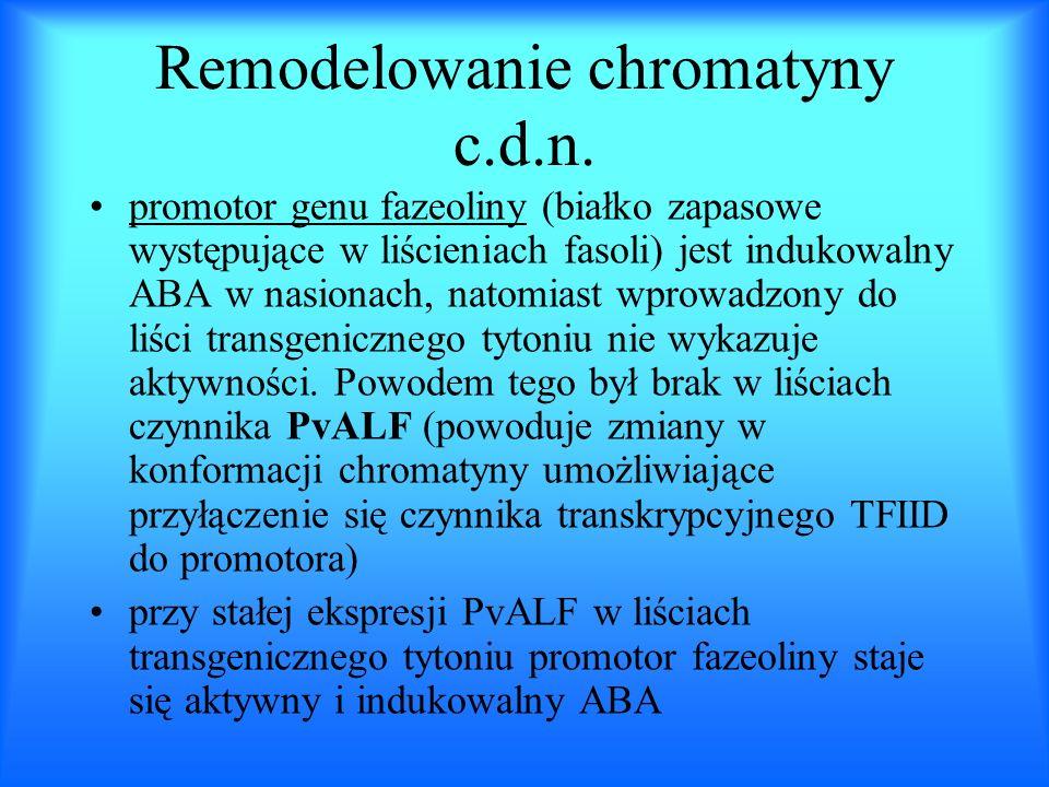 Remodelowanie chromatyny c.d.n. promotor genu fazeoliny (białko zapasowe występujące w liścieniach fasoli) jest indukowalny ABA w nasionach, natomiast