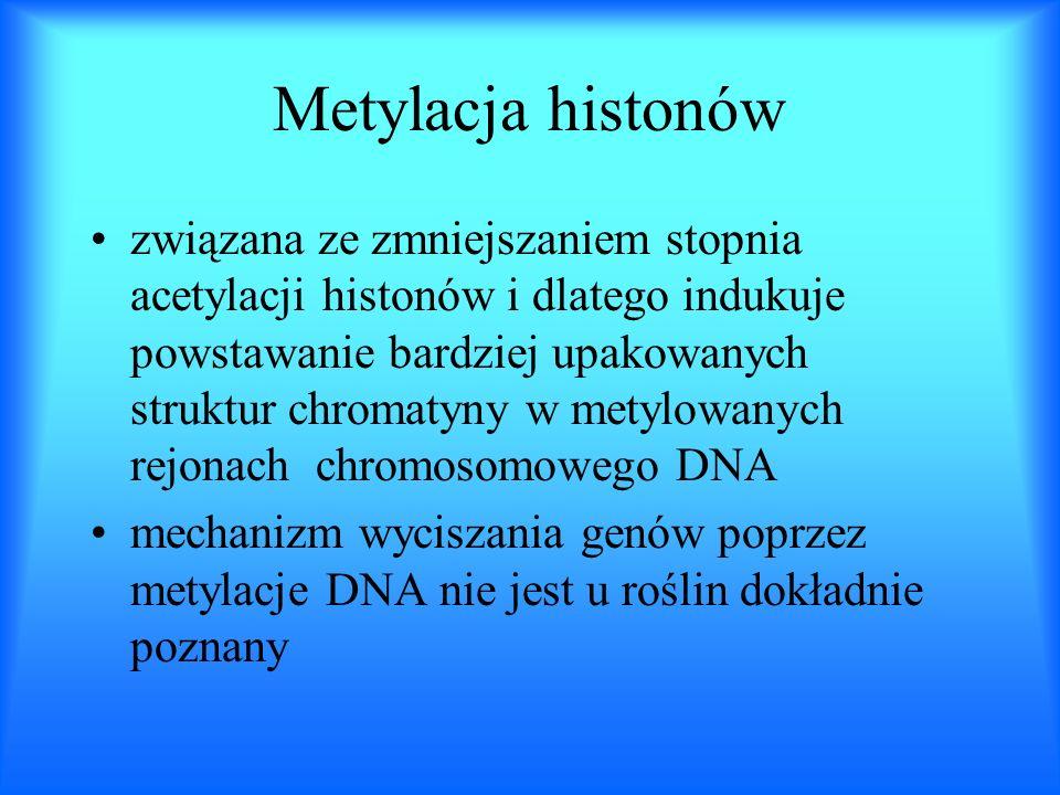 Metylacja histonów związana ze zmniejszaniem stopnia acetylacji histonów i dlatego indukuje powstawanie bardziej upakowanych struktur chromatyny w met