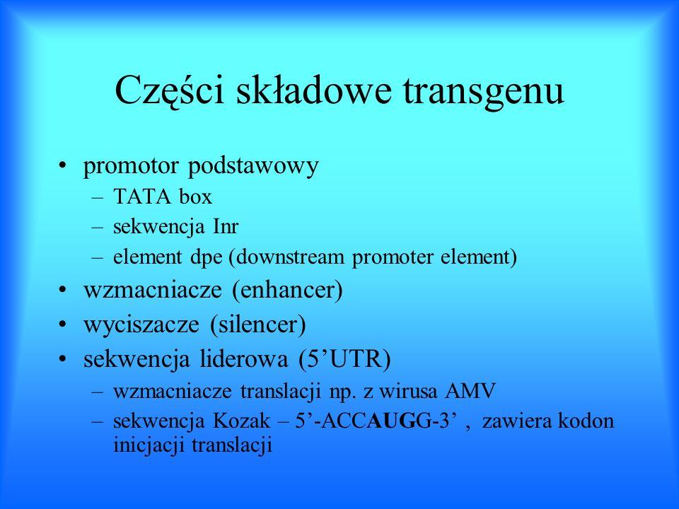 Części składowe transgenu promotor podstawowy –TATA box –sekwencja Inr –element dpe (downstream promoter element) wzmacniacze (enhancer) wyciszacze (s