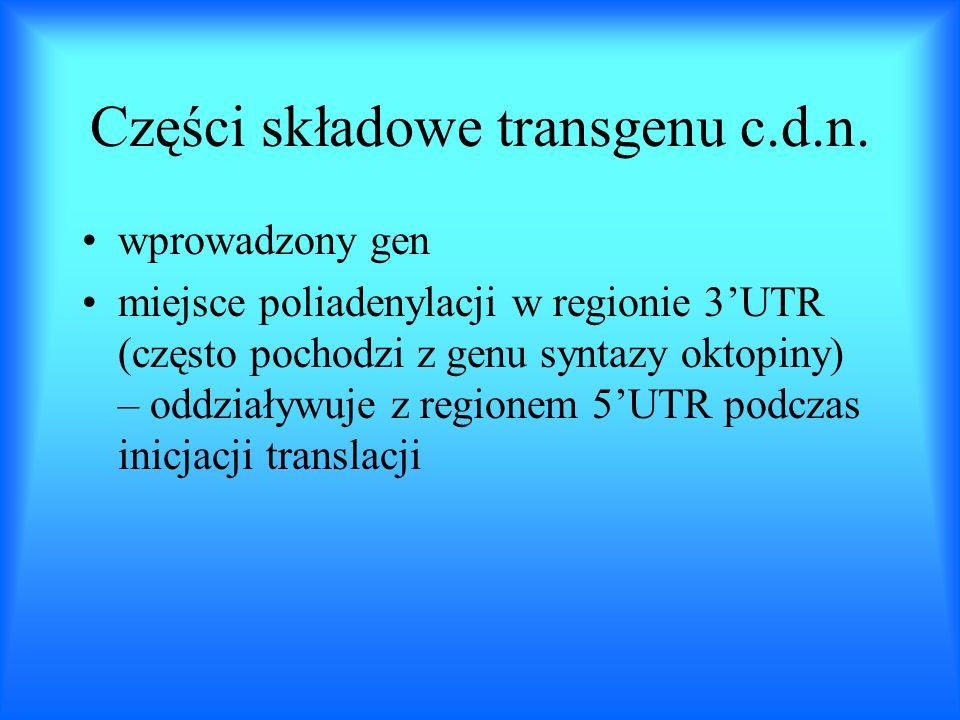 Części składowe transgenu c.d.n. wprowadzony gen miejsce poliadenylacji w regionie 3UTR (często pochodzi z genu syntazy oktopiny) – oddziaływuje z reg