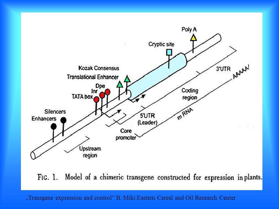 Najczęściej stosowane promotory Promotory genów konstytutywnych CaMV 35 S nos ocs Promotory enzymów tkankowo specyficznych fazeoliny gluteniny α-amylazy Pochodzenie Wirus mozaiki kalafiora Syntaza nopaliny (T-DNA) Syntaza oktopiny (T-DNA) Miejsce ekspresji genu liścienie bielmo warstwa aleuronowa