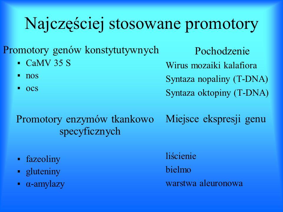 Najczęściej stosowane promotory Promotory genów konstytutywnych CaMV 35 S nos ocs Promotory enzymów tkankowo specyficznych fazeoliny gluteniny α-amyla