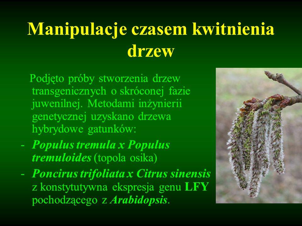 Manipulacje czasem kwitnienia drzew Podjęto próby stworzenia drzew transgenicznych o skróconej fazie juwenilnej. Metodami inżynierii genetycznej uzysk
