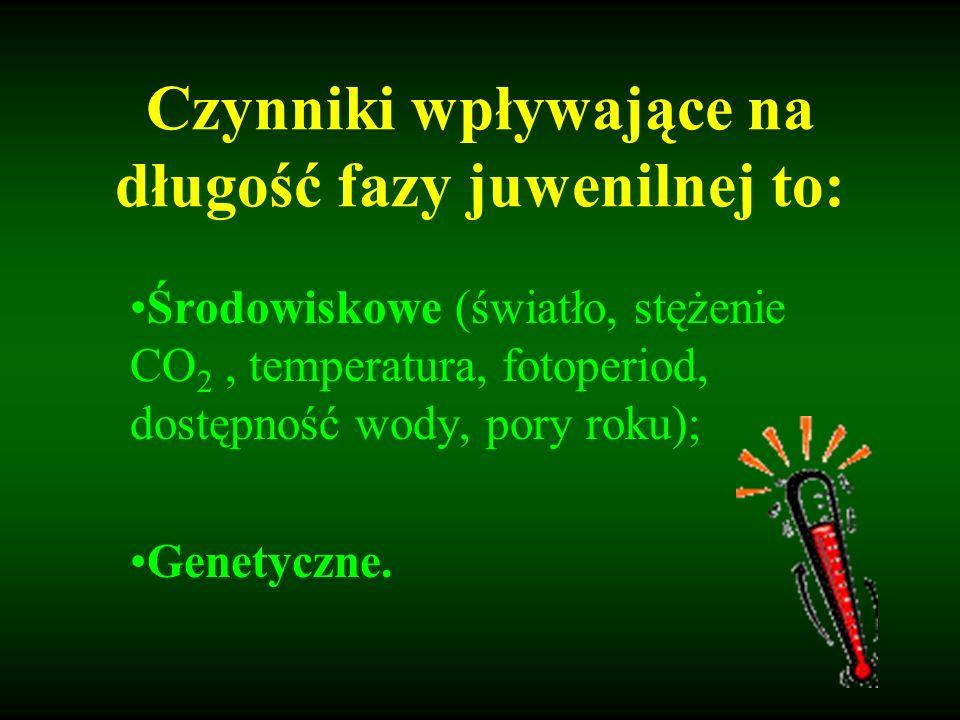 Czynniki wpływające na długość fazy juwenilnej to: Środowiskowe (światło, stężenie CO 2, temperatura, fotoperiod, dostępność wody, pory roku); Genetyc
