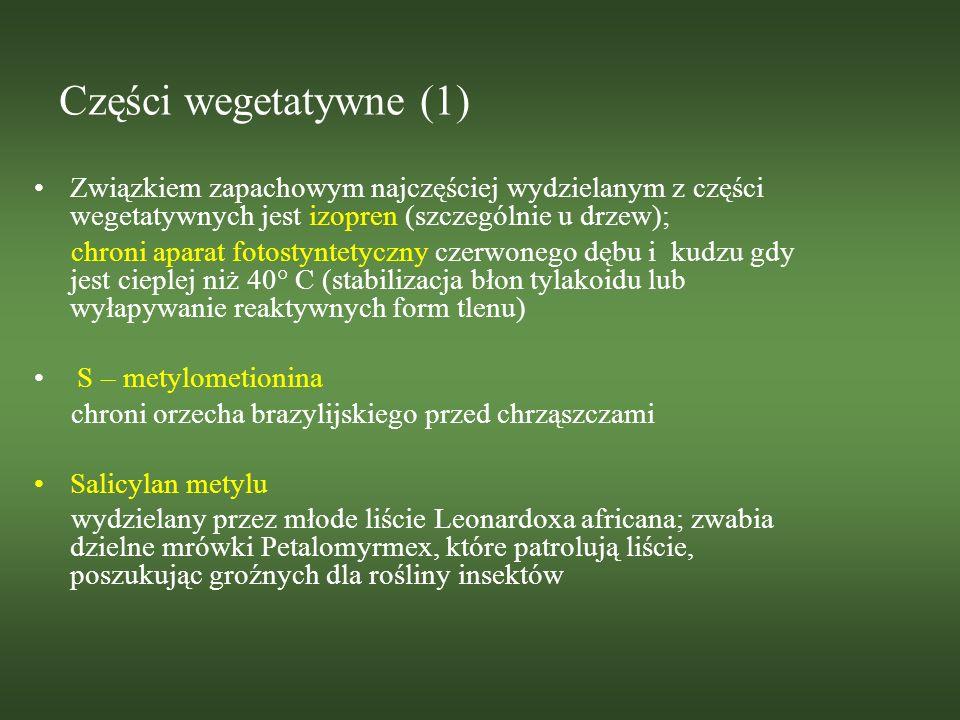 Części wegetatywne (2) Substancje zapachowe wydzielane są również dopiero w momencie uszkodzenia rośliny; Pochodzą ze struktur sekrecyjnych, w których są syntetyzowane i magazynowane lub powstają w momencie uszkodzenia (green-leaf volatiles – 6C aldehydy, alkohole i estry) Estry alifatyczne 3-heksen-1-olu wydzielane przez uszkodzony tytoń odstraszają ćmy chcące złożyć jaja (profil emitowanych zapachów jest inny w dzień i w nocy)
