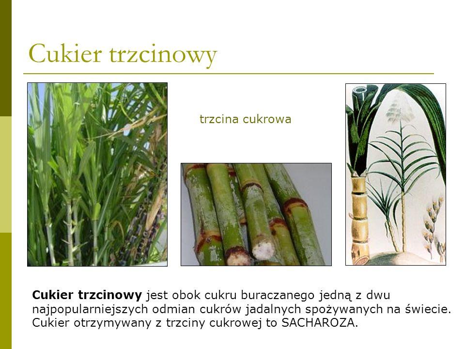 Cukier buraczany Cukier buraczany, jako gotowy produkt, jest w Polsce nazywany cukrem spożywczym.