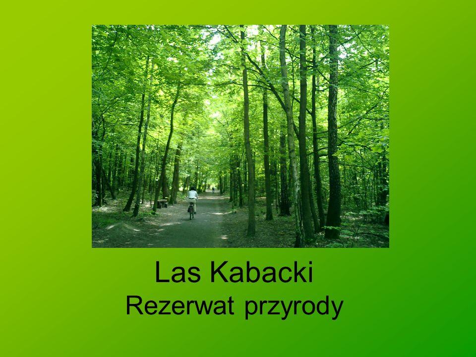 Informacje ogólne Ochronę prawną, ze względu na swoje wartości przyrodniczo-krajobrazowe, teren ten uzyskał na mocy zarządzenia Ministra Leśnictwa i Przemysłu Drzewnego z dnia 11 sierpnia 1980 r., które zostało opublikowane w Monitorze Polskim nr 19 z 1980 r., pod pozycją 94.