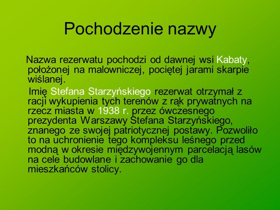 Borsuk, jaźwiec (Meles meles), ssak zaliczany do rodziny łasicowatych z rzędu drapieżnych, największy polski przedstawiciel tej rodziny, zamieszkujący lasy Eurazji aż po Japonię.