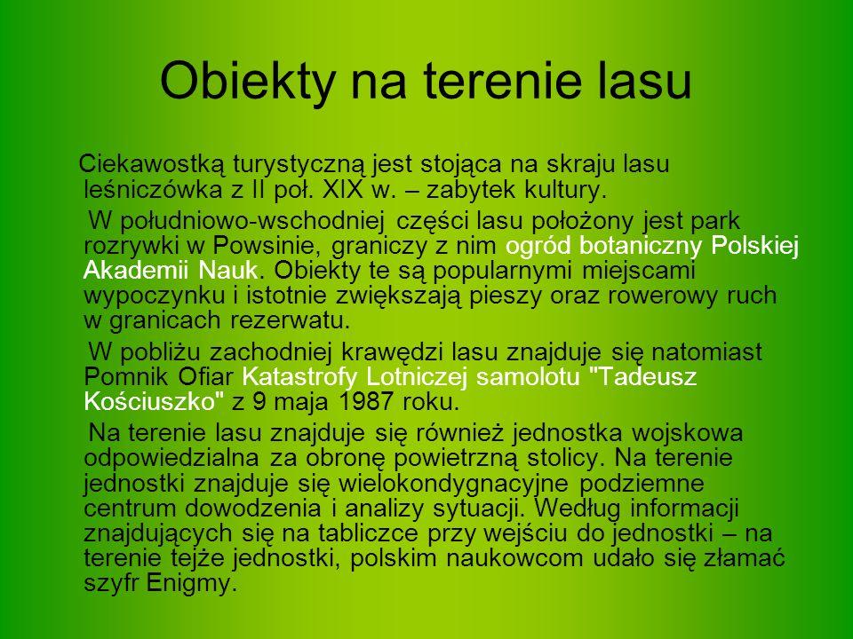 Jesion wyniosły (Fraxsinus excelsior), wysokie drzewo z rodziny oliwkowatych, jedyny gatunek jesionu rosnącego dziko w Polsce.