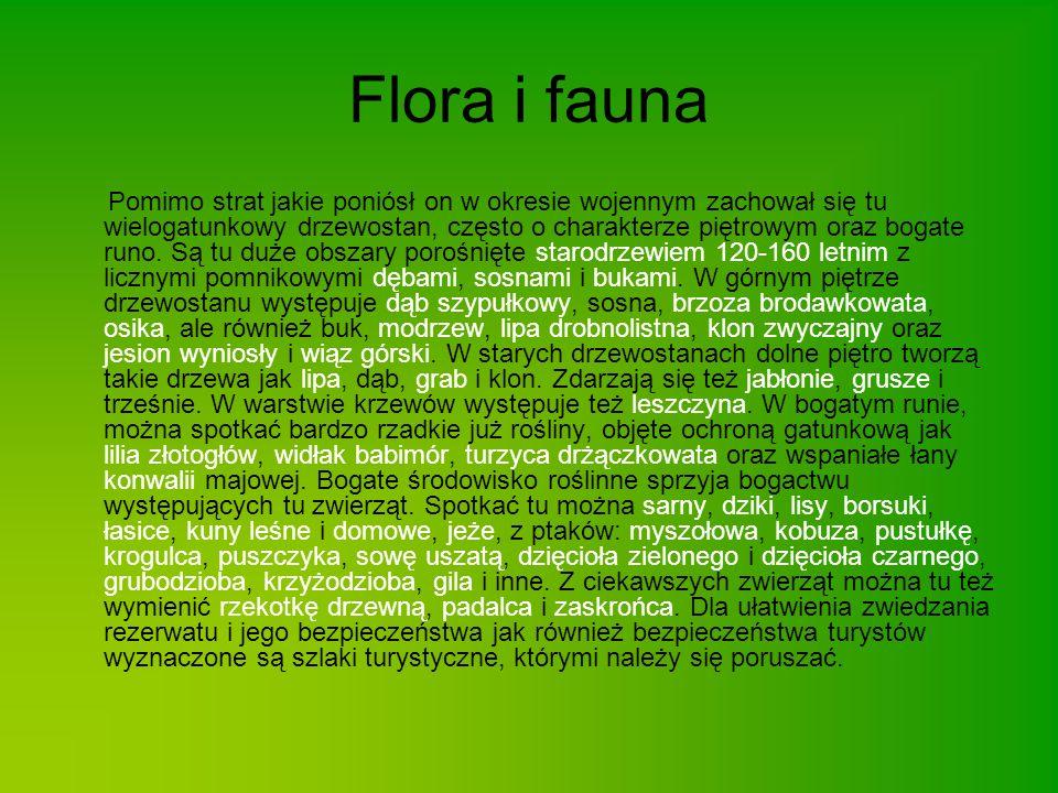 Chronione ochrona ścisła Lilium martagon Lycopodium clvatum ochrona częściowa Carex arenaria konwalia majowa (Convallaria maialis) Frangula alnus