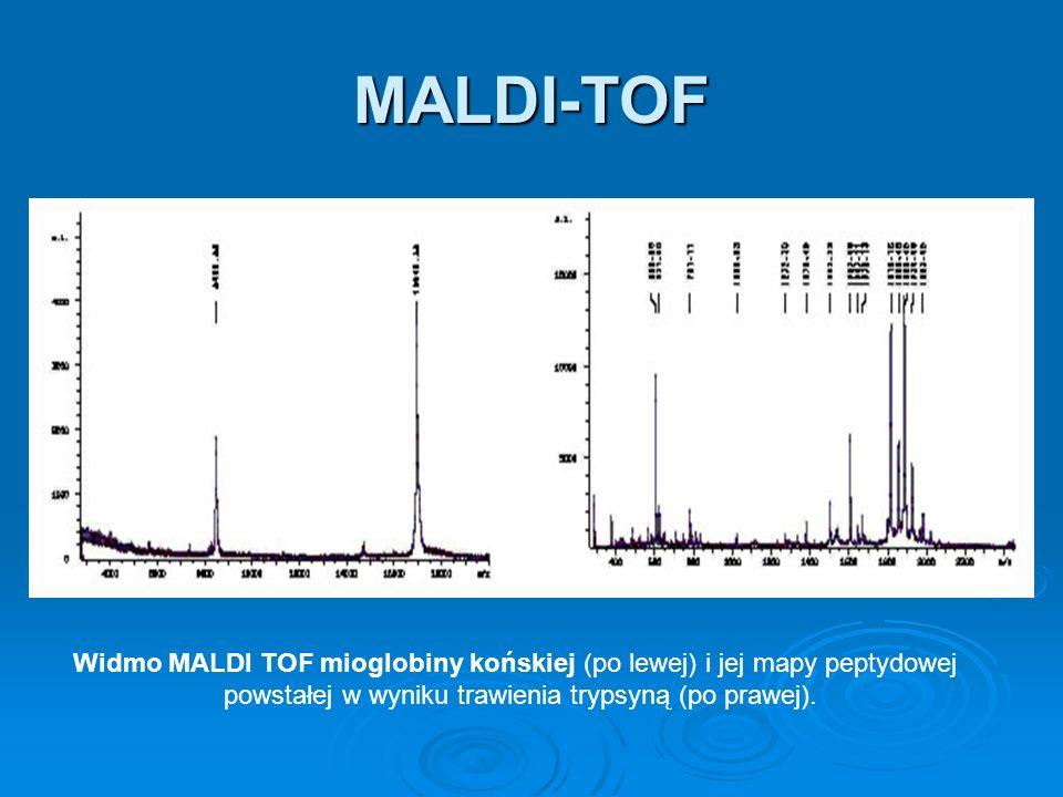 MALDI-TOF Widmo MALDI TOF mioglobiny końskiej (po lewej) i jej mapy peptydowej powstałej w wyniku trawienia trypsyną (po prawej).