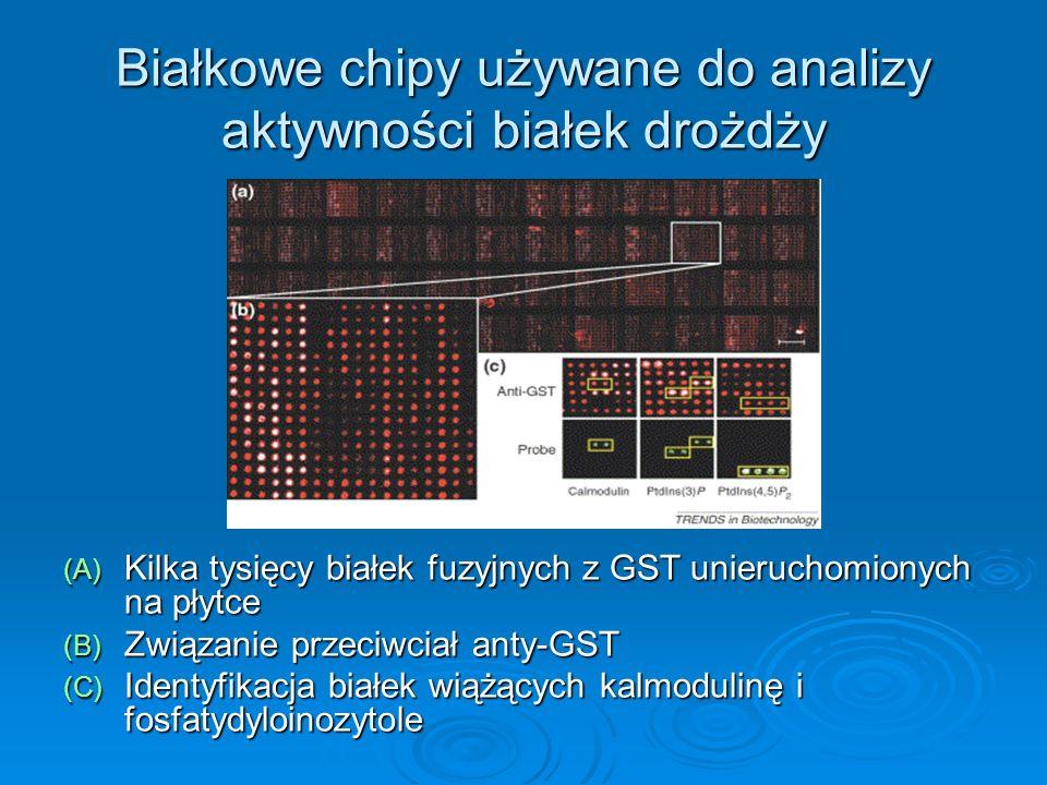 Białkowe chipy używane do analizy aktywności białek drożdży (A) Kilka tysięcy białek fuzyjnych z GST unieruchomionych na płytce (B) Związanie przeciwc
