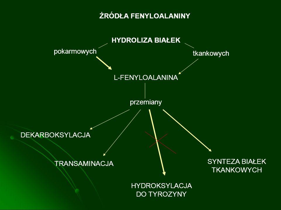 ŻRÓDŁA FENYLOALANINY HYDROLIZA BIAŁEK pokarmowych tkankowych L-FENYLOALANINA przemiany DEKARBOKSYLACJA TRANSAMINACJA HYDROKSYLACJA DO TYROZYNY SYNTEZA