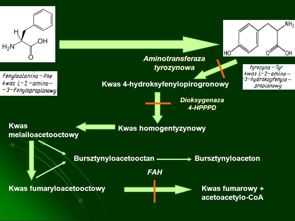 Kwas 4-hydroksyfenylopirogronowy Kwas homogentyzynowy Kwas melailoacetooctowy Kwas fumaryloacetooctowyKwas fumarowy + acetoacetylo-CoA Bursztynyloacet