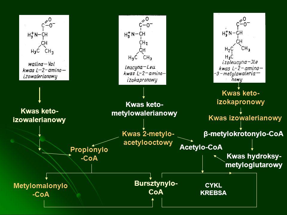 Kwas keto- izowalerianowy Propionylo -CoA Metylomalonylo -CoA Bursztynylo- CoA CYKL KREBSA Acetylo-CoA Kwas 2-metylo- acetylooctowy Kwas keto- metylow