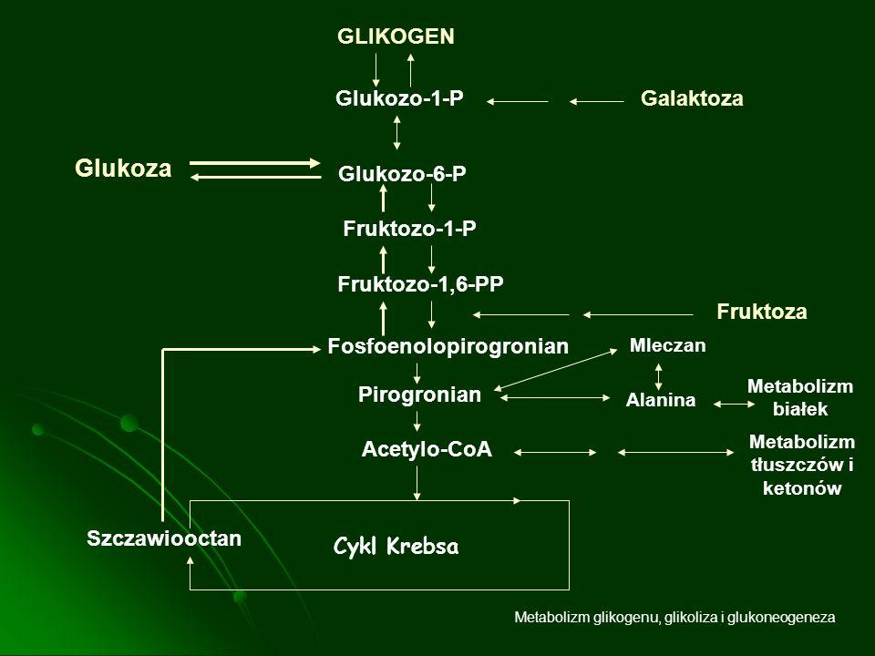 Metabolizm glikogenu, glikoliza i glukoneogeneza GLIKOGEN Glukozo-1-PGalaktoza Glukozo-6-P Glukoza Fruktozo-1-P Fruktozo-1,6-PP Fosfoenolopirogronian