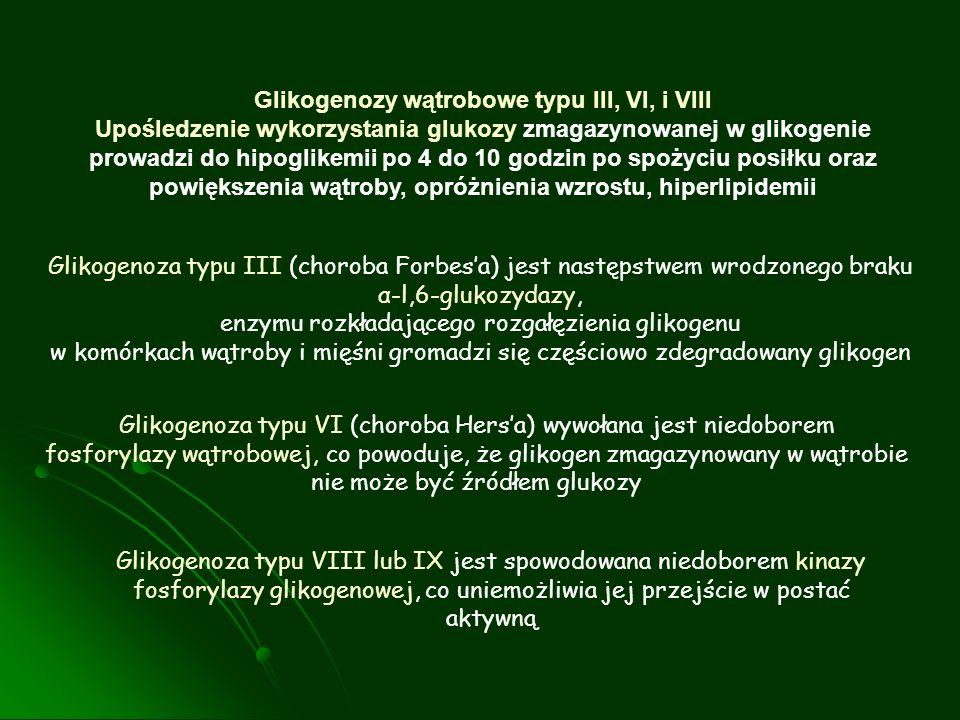 Glikogenozy wątrobowe typu III, VI, i VIII Upośledzenie wykorzystania glukozy zmagazynowanej w glikogenie prowadzi do hipoglikemii po 4 do 10 godzin p