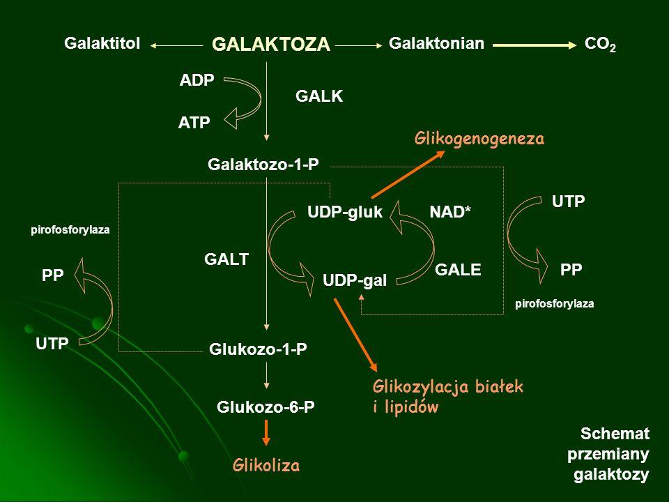 Galaktitol GALAKTOZA GalaktonianCO 2 ADP ATP GALK Galaktozo-1-P Glukozo-1-P Glukozo-6-P Glikoliza UDP-gal UDP-glukNAD* GALE UTP PP GALT PP UTP Glikozy