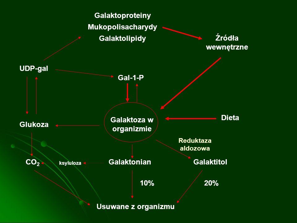 Galaktoproteiny Mukopolisacharydy Galaktolipidy UDP-gal Glukoza CO 2 Galaktonian 10% Gal-1-P Źródła wewnętrzne Dieta Galaktitol 20% Usuwane z organizm