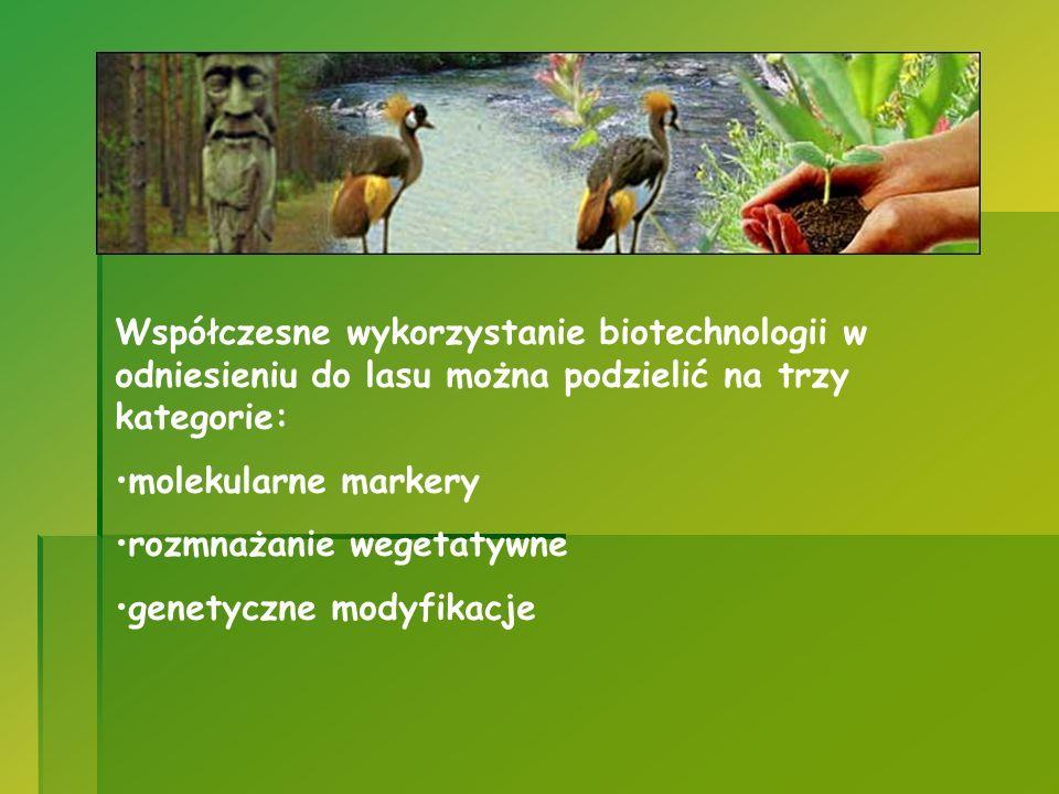 Współczesne wykorzystanie biotechnologii w odniesieniu do lasu można podzielić na trzy kategorie: molekularne markery rozmnażanie wegetatywne genetycz