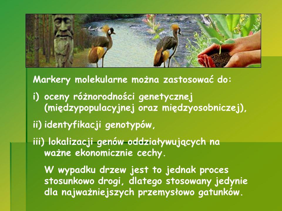 Markery molekularne można zastosować do: i)oceny różnorodności genetycznej (międzypopulacyjnej oraz międzyosobniczej), ii)identyfikacji genotypów, iii