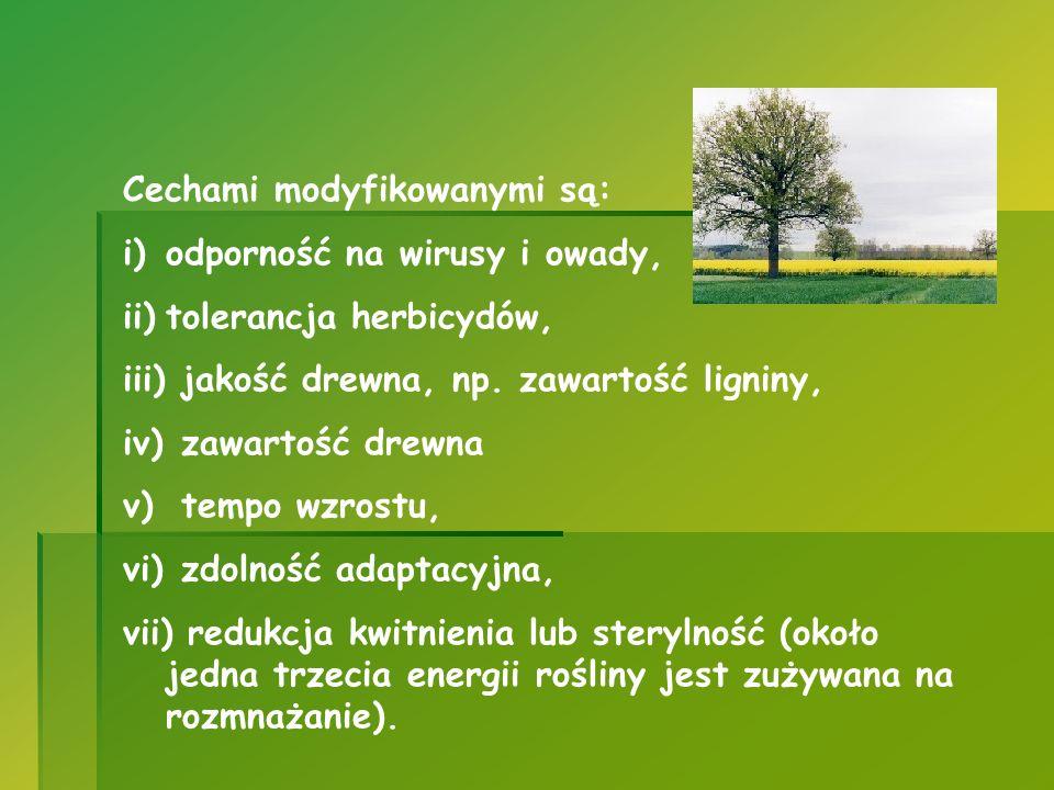 Cechami modyfikowanymi są: i)odporność na wirusy i owady, ii)tolerancja herbicydów, iii) jakość drewna, np. zawartość ligniny, iv) zawartość drewna v)