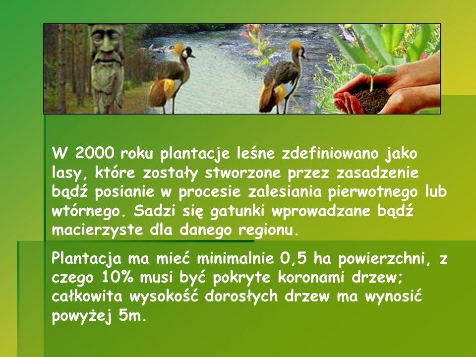 W 2000 roku plantacje leśne zdefiniowano jako lasy, które zostały stworzone przez zasadzenie bądź posianie w procesie zalesiania pierwotnego lub wtórn