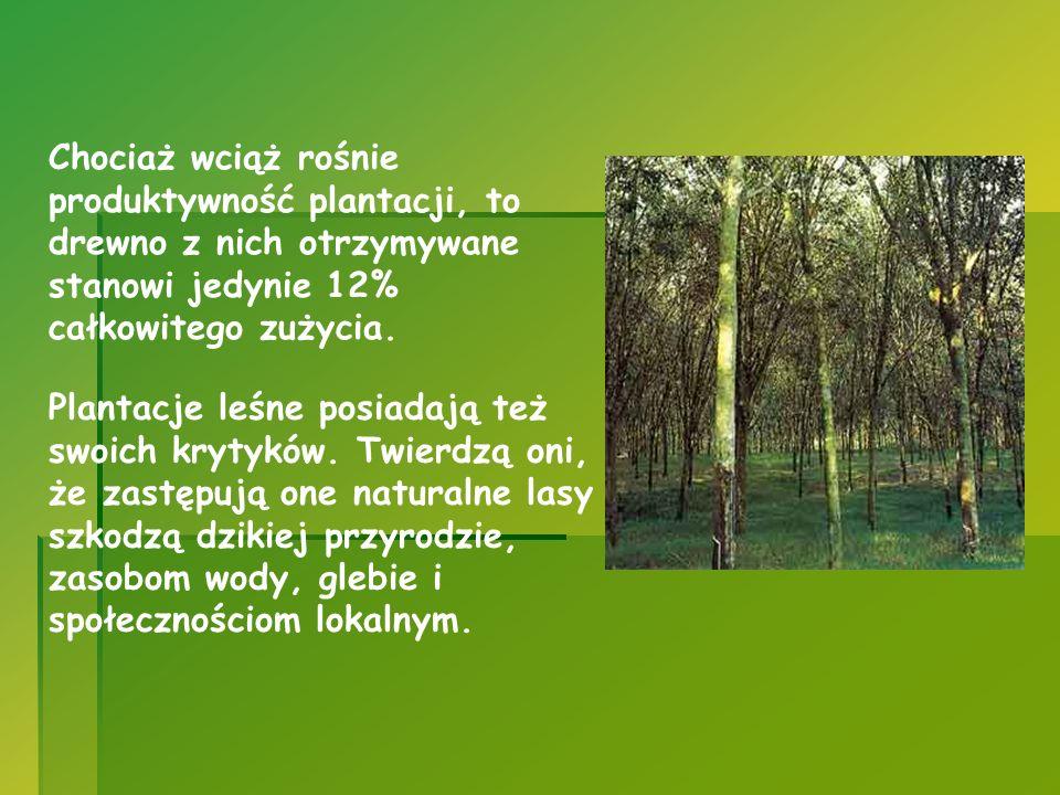 Chociaż wciąż rośnie produktywność plantacji, to drewno z nich otrzymywane stanowi jedynie 12% całkowitego zużycia. Plantacje leśne posiadają też swoi