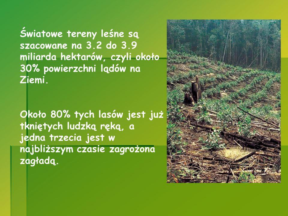 Światowe tereny leśne są szacowane na 3.2 do 3.9 miliarda hektarów, czyli około 30% powierzchni lądów na Ziemi. Około 80% tych lasów jest już tkniętyc