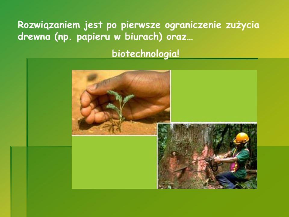 Rozwiązaniem jest po pierwsze ograniczenie zużycia drewna (np. papieru w biurach) oraz… biotechnologia!